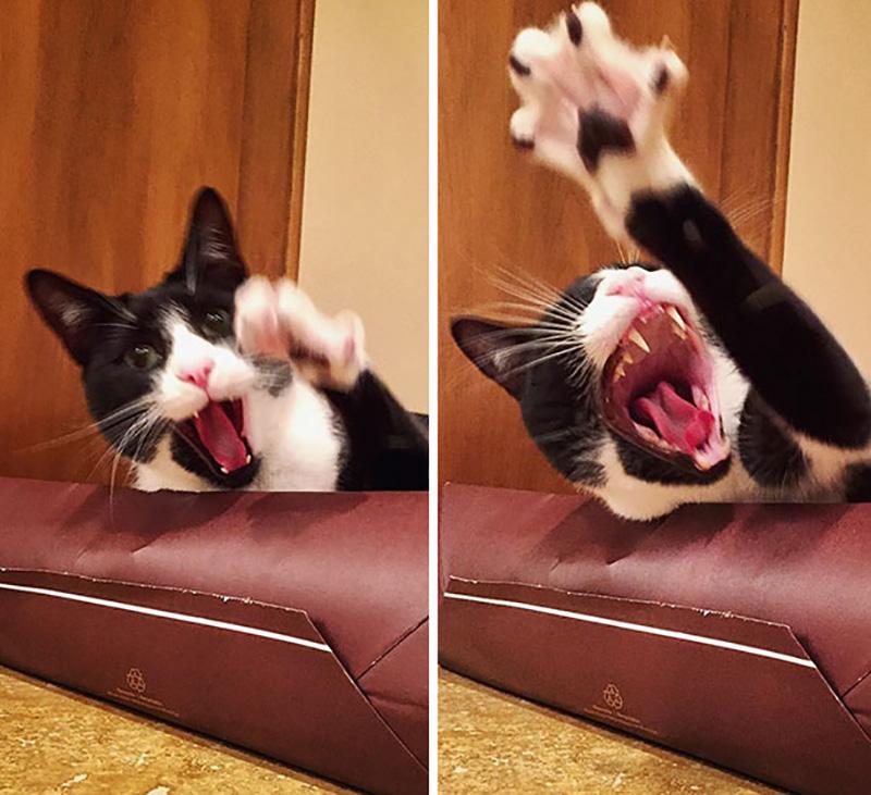 evcil-hayvanlar, komik-kediler , dramatik-kediler
