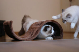 Komik Kediler,Evcil Hayvanlar