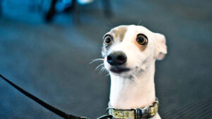 Komik Köpekler,Evcil Hayvanlar