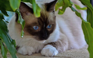 Yavru Kediler, Evcil Hayvanlar