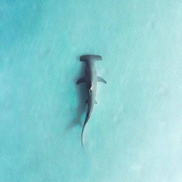 Okyanusta Yaşayan Canlılar