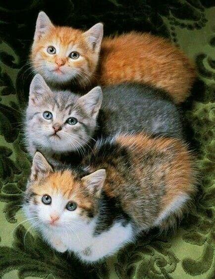 Komik Kediler,Evcil Hayvanlar,Yavru Kediler