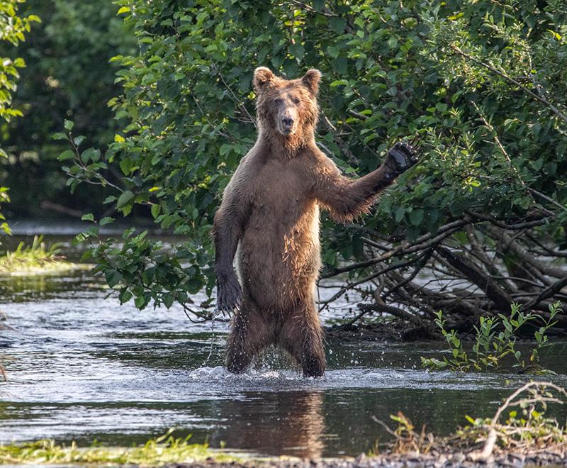 Vahşi Hayvanların Komik Fotoğrafları