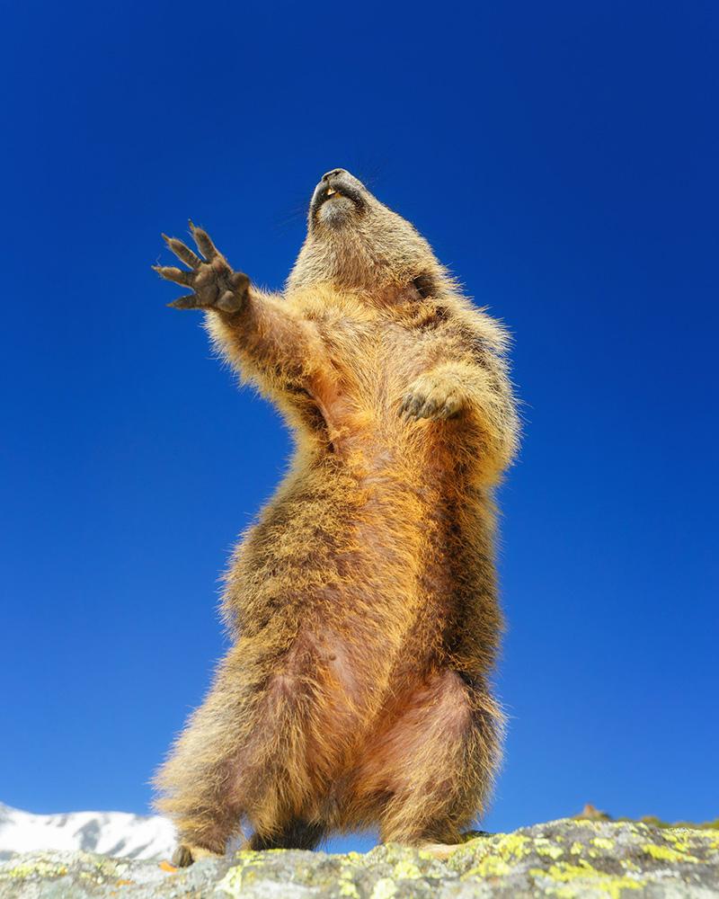 Vahşi Hayvanların Komik Fotoğrafları – 2