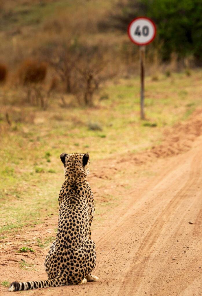 Vahşi Hayvanların Komik Fotoğrafları3