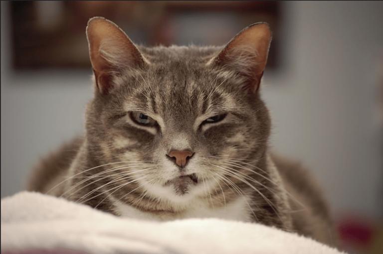 Kızgın Kediler