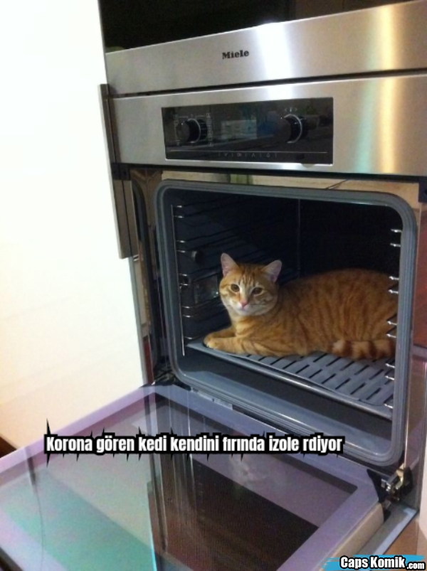 Korona gören kedi kendini fırında izole rdiyor