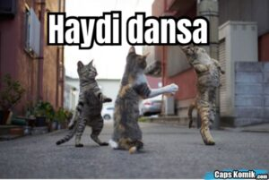 Haydi dansa