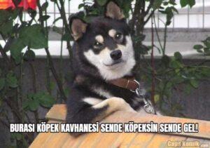BURASI KÖPEK KAVHANESİ SENDE KÖPEKSİN SENDE GEL!