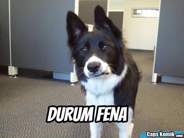 DURUM FENA