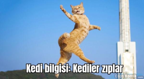 Kedi bilgisi: Kediler zıplar