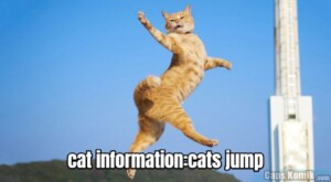cat information:cats jump