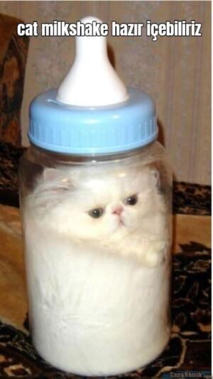 cat milkshake hazır içebiliriz