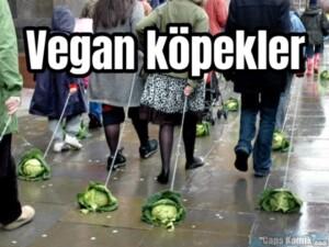Vegan köpekler