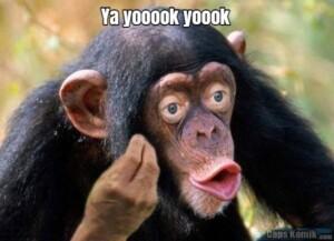 Ya yooook yoook