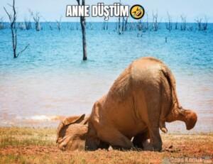 ANNE DÜŞTÜM🤣