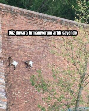 Düz duvara tırmanıyorum artık sayende
