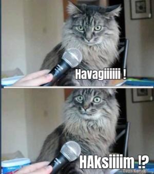 Havagiiiiii !… HAksiiiim !?