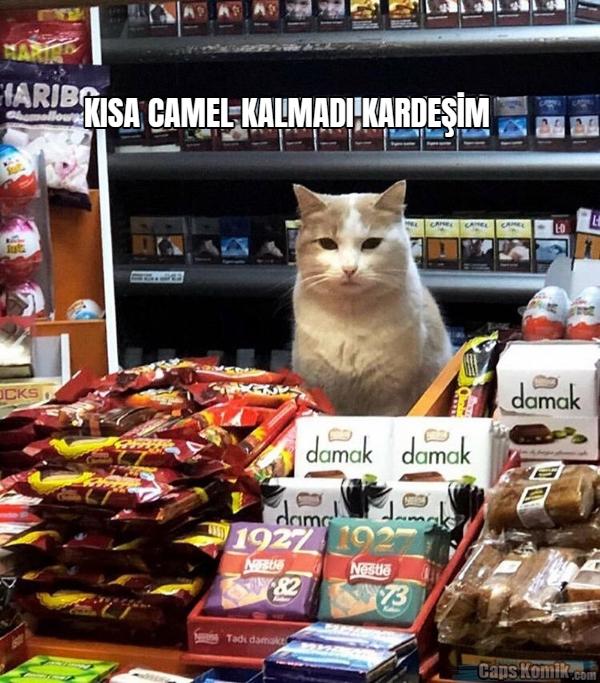 KISA CAMEL KALMADI KARDEŞİM