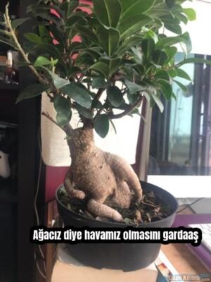 Ağacız diye havamız olmasını gardaaş