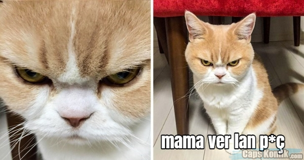 mama ver lan p*ç