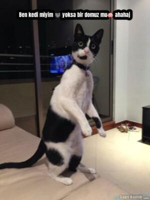 Ben kedi miyim 🐱 yoksa bir domuz mu🐖 ahahaj