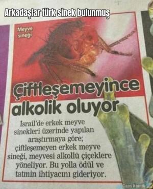 Arkadaşlar türk sinek bulunmuş